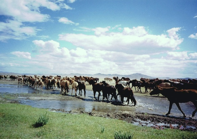風になる旅、モンゴルに広がる大平原を馬で駆けぬける