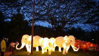 動物たちの距離が近すぎる!シンガポール「ナイトサファリ」がすごい
