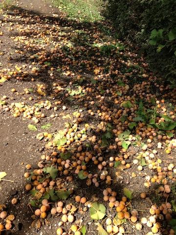 シュールなキノコがたまらない!都会散策、秋を感じる穴場スポット