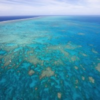 そこは世界最大の珊瑚帯!世界遺産の「巨大貝」が大きすぎる