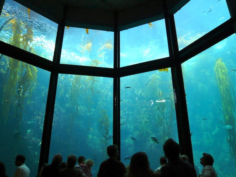 シロナガスクジラに会えるかも!「奇跡の海」モントレー湾