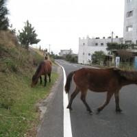 ここ、本当に日本?野生の馬に会える町に行ってみた