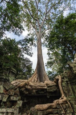 【10万円で行ける絶景】遺跡を浸食する巨木の威力