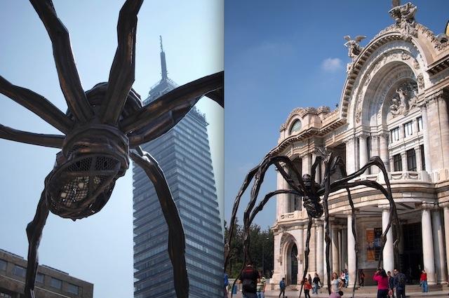 旅する巨大クモがメキシコに出現!