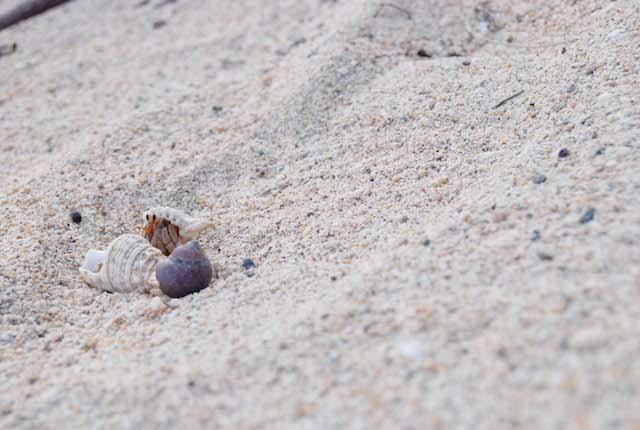 """本当の海の味を知ってますか? 加計呂麻島の""""さんご塩"""""""