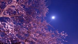 今年のお花見は「こたつ」でぬくぬく! 夜桜もOK