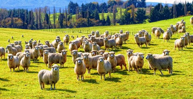 決定!世界一即戦力な国はなぜか羊がいっぱいのあの国