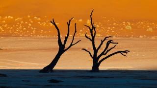 現実の風景とは思えない「絵」のような死の沼地