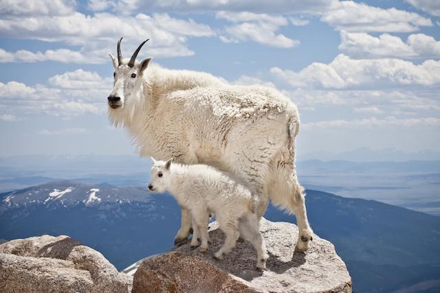 時には主役、時には脇役!動物たちがつくりだす「唯一無二の景色」