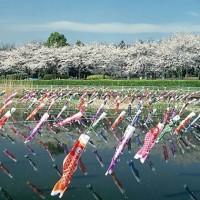 日本人なら一度は見るべし!世界に誇る圧巻の光景、「鯉のぼり祭り」3選