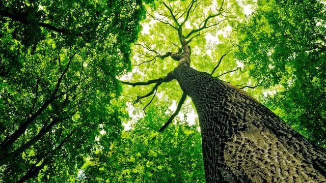 緑揺れる、初夏の庭に会いに行く。東京の自然散策スポット4つ