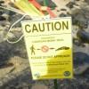 絶滅危惧種ハワイアン・モンクシールに会える!必見オアフ島の隠れスポット
