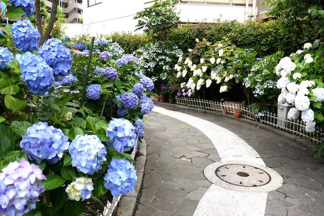 梅雨の合間に訪れたい!東京近郊の花菖蒲スポット