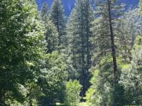 これぞ思い描く避暑地の理想型!大自然と共存する「ヨセミテ国立公園」