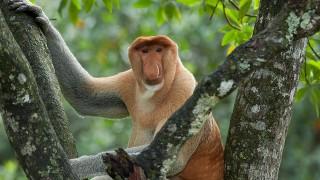 【マレーシア・コタキナバル】珍しい猿に出逢える魅惑のネイチャーワールド