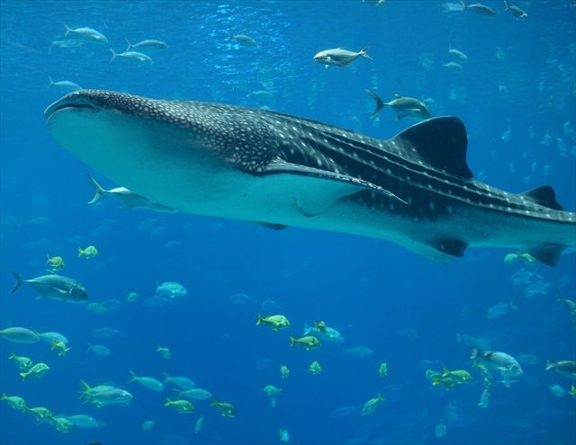 【都内近郊】大人が楽しめる・幻想的なブルーに囲まれる「夜の水族館」5つ