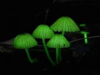 夜の森を彩る、不思議な「天国の光のキノコ」たち