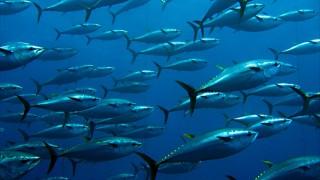 魚介類が好きな国はどこ? 世界のシーフード料理