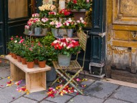 【文化の違い】パリで元気が出る花束を注文したら、とんでもなく悲しい花束に
