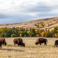 黄金の穀倉地帯 グレート・プレーンズGreat Plains