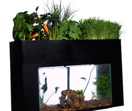 究極の「エコ」! 野菜を育てちゃう水槽が海外で話題に
