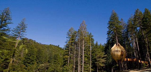 【NZ】森と一体化!タマネギ型ツリーハウスの正体は?