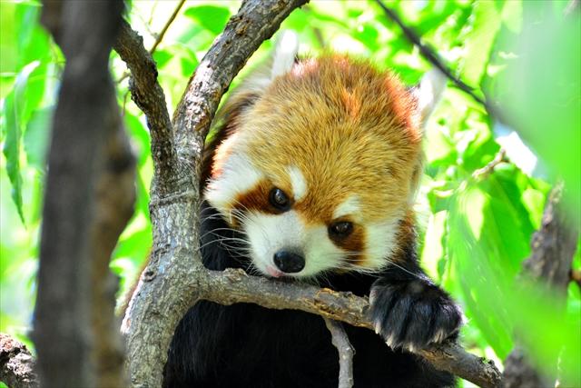 【都内近郊】タダほど素敵なものはない!入場料無料の動物園4選