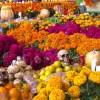 美しいメキシコのお盆「死者の日」代表スポットと現地イベント情報