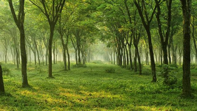 【日本】秘密にしたい、安らぎの空間。「森の中の小さなホテル」3選