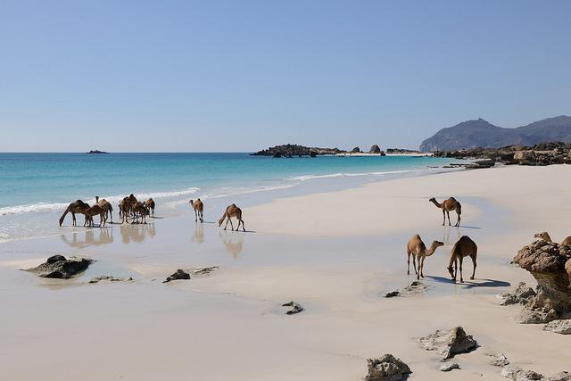 サッカーや砂漠だけじゃない!大自然を満喫できる国オマーン