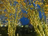 【東京デート】ソラマチのイルミとクリスマスマーケットがちょっといい感じ