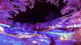 日本夜景遺産!この冬、絶対に観ておきたい都内近郊イルミネーション4選