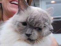 たくさんの愛をありがとう。ギネス記録をもつ猫が天国の旅へ