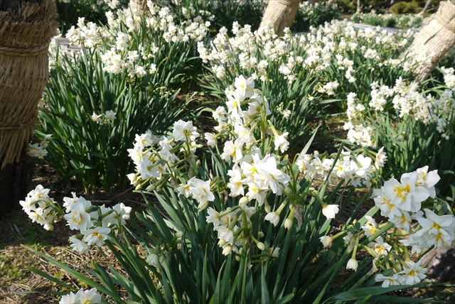 一足早い春を探しに。三浦半島城ケ島、三崎めぐり