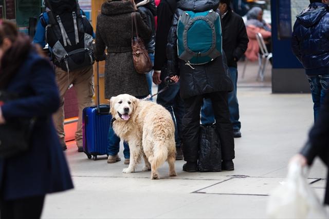 ドイツの犬はどうしてお利口なの?電車やレストランでも同伴OKなワケとは