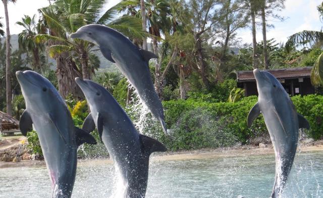 カリブの波が呼んでいる!オールインクルーシブのロマンティック・リゾート
