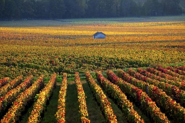 ブルゴーニュでハートをデトックス!心温まる絵画のような景色