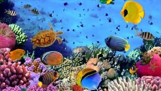 まるで人魚姫の世界。潜水艦に乗って出会う海の生き物たち