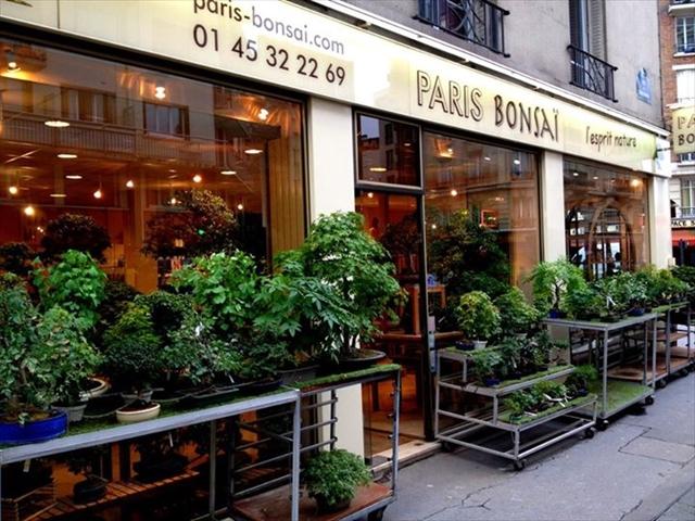 盆栽の剪定がショーに?!パリジェンヌも夢中のBONSAIアートの楽しみ方