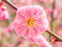 寒空に凛と咲く花。春に先駆け梅見はいかが?
