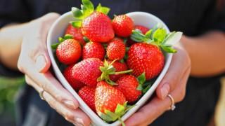 【実食ランキング】いちご狩り14品種食べ比べ!一番おいしいのは?