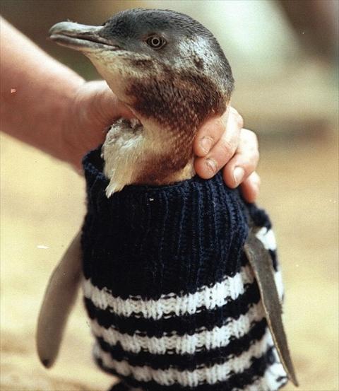 ペンギンのセーター