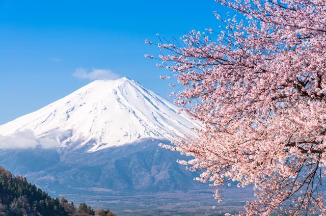 いくつ知ってる? 大和心揺さぶる「桜」のロマンチックで風流な異称