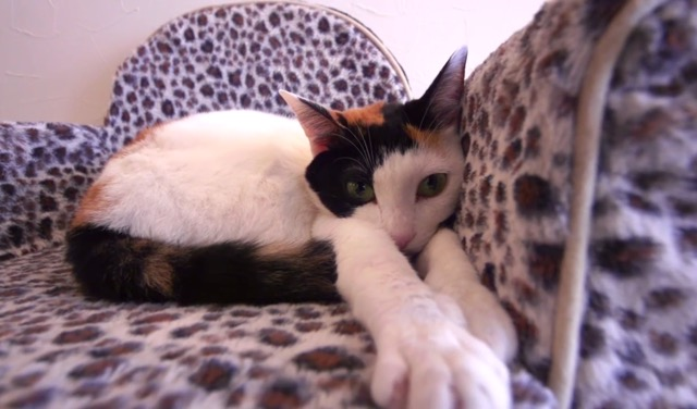 これぞジャパニーズスタイル!癒しを求めて「猫カフェ」へ
