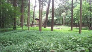 【首都圏】幹線道路の下にある、知られざる水源の森