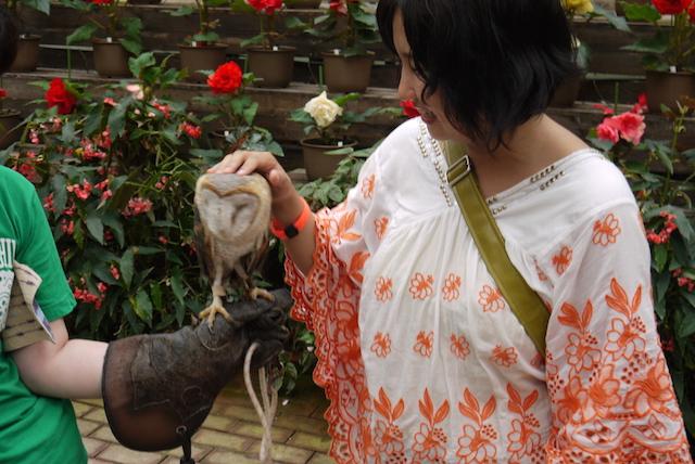 【富士山麓】フクロウ三昧の花鳥園で和む休日