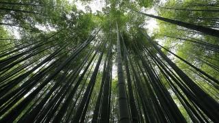 雨の日だから美しい、鎌倉の情緒あふれるお寺3選