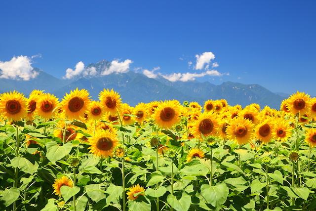 懐かしさと切なさが交錯する季節、夏。あなたの心にサウダージはありますか?