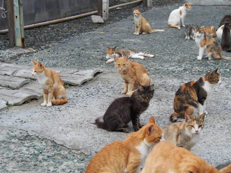 「島民15人、猫100匹」ネコだらけの島があった!