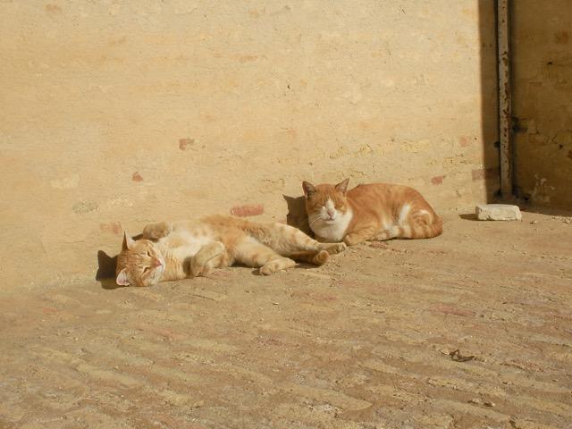 小林希の世界のネコ旅〜チュニジア・ケロアン編